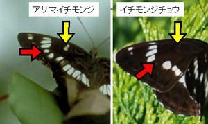 Asaichi18